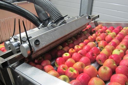 TTrocknungsanlagen Lebensmitter - Oberflächentrocknung Äpfel