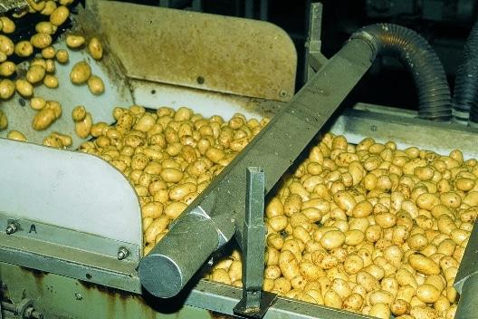 Lebensmittel Trocknungsanlage - Kartoffeln Oberflächentrocknung