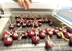 Lebensmittel Trocknungsanlage -Kirschen Oberflächentrocknung